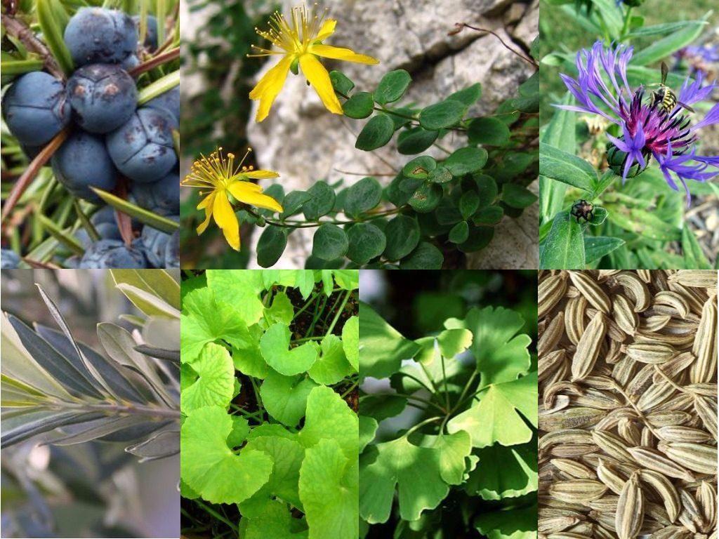 7 des 130 plantes entrant dans la composition de la liqueur Chartreuse